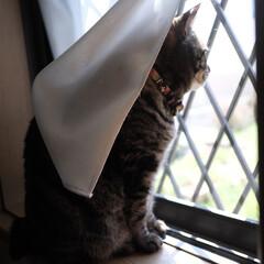猫派の旦那と犬派のわたし/にゃんこ同好会/保護猫/フォロー大歓迎/リミアペット同好会 今日も、鳥さんとお話しながら  ニャルソ…
