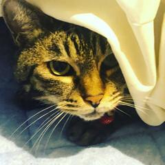 保護猫/リミアペット同好会/にゃんこ同好会/お正月2020/フォロー大歓迎 2019年、お世話になりました  まるさ…
