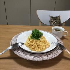 猫のいる暮らし/うちの子ベストショット/自慢のペット/ねこのいる生活/LIMIAペット同好会/LIMIAごはんクラブ/... いつかのごはん。