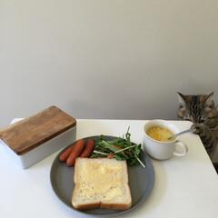 ねこのいる生活/自慢のペット/うちの子ベストショット/猫のいる暮らし/LIMIAペット同好会/LIMIAごはんクラブ/... いつかの朝食。 狙われる食パン🍞