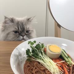 Costco/コストコ/猫のいる暮らし/自慢のペット/ねこのいる生活/フォロー大歓迎/... コストコのちょる麺。