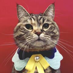 ねこのいる生活/自慢のペット/猫のいる暮らし/うちの子ベストショット/フォロー大歓迎/LIMIAペット同好会/... むぅたんの証明写真!