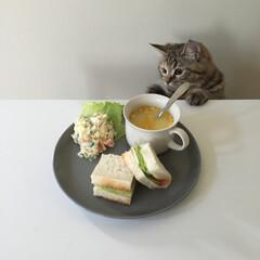 猫のいる暮らし/自慢のペット/LIMIAペット同好会/LIMIAごはんクラブ/フォロー大歓迎/わたしのごはん/... いつかの朝ごはん