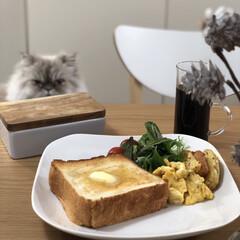 ねこのいる生活/自慢のペット/猫のいる暮らし/うちの子ベストショット/LIMIAペット同好会/LIMIAごはんクラブ/... いつかの朝食