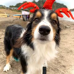 ボーダーコリー/クリスマス2019 海でクリスマスパーティーしたよぉ🎄🎉🎅