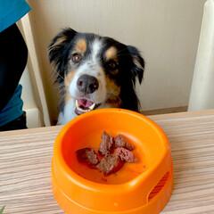 ランチ/焼肉/犬と一緒に焼肉/わんこ/犬/ボーダーコリー/... ワンズと一緒に お台場にある焼肉のうしす…