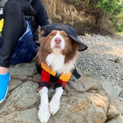 幸せ/楽しい/サップ/海/愛犬/ボーダーコリー/... 紫外線が強いから 帽子🧢をかぶろうねー😊