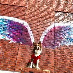ボーダーコリー/Bordercollie/翼/わんこ/はね/犬/... 飛んでみたいなっ☆