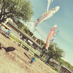 鯉のぼり/春のフォト投稿キャンペーン 大きな鯉のぼりに大興奮!