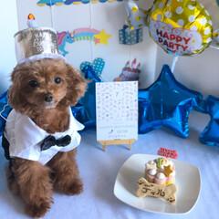 誕生日/いぬ/トイプードル/トイプードルアプリコット 2月6日僕ちゃん7歳になりました🎂🎈 つ…