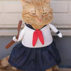 福ちゃん/トラ猫/茶トラ/猫 ヤサグレ福子