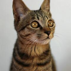 保護猫/トラ猫/キジトラ/笑ちゃん/LIMIAペット同好会/フォロー大歓迎/... 3月7日、 笑ちゃんの命日でした。 4ニ…(1枚目)