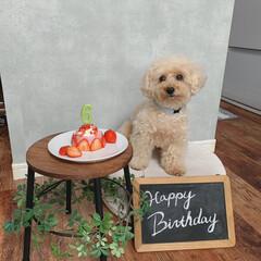 コンクリート風壁紙/わんこ同好会/いちごムースケーキ犬用/手作りハンバーガー犬用/6歳/おめでとう/... 今日はココアの6歳の誕生日🎂 手作りパン…