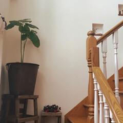 おうち自慢 階段の踊り場😊 角には本物のレンガを貼り…(1枚目)