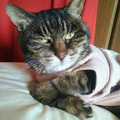 肘あるんかい/テストに出るよ/アニー/キジトラ/22歳/老猫/... 🐱「ココ、アニーの右肘!」