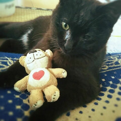 黒猫/子猫/角膜分離症/気管支炎/キョロちゃん/フォロー大歓迎/... お気に入りのスージーズーのぬいぐるみ(´…
