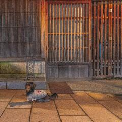 ミニチュアダックス/ペット仲間募集/わんこ同好会/わんこと旅/愛犬との旅/うちの子ベストショット/... 石川県金沢市の「ひがし茶屋街」! 時間は…