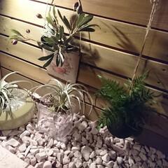 室内ガーデン 室内ガーデンを造りました