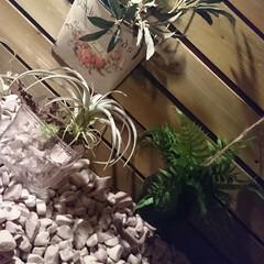 「室内ガーデンを造りました」(1枚目)