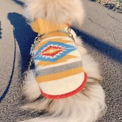 ドッグウェア/お散歩/ポメラニアン/LIMIAペット同好会/フォロー大歓迎/ペット/... お友達からもらったお洋服👕 少し大きいけ…