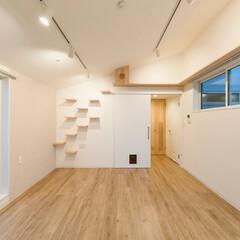 LIMIAな暮らし/建築/インテリア/住まい/猫/猫の家/... 猫と住む、斜め天井のリビング・ダイニング…