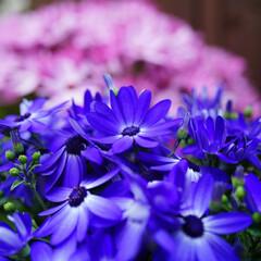 綺麗/花/温室/LIMIAおでかけ部/フォロー大歓迎/おでかけ/... 春はもうすぐだね✨