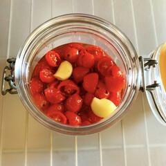 セミドライトマト/自家製/ミニトマト/簡単/おうちご飯/作り置き/... セミドライトマト。 たくさんミニトマトを…