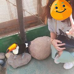 動物園/おでかけ/わたしのGW 動物園に行って来ました。ここは動物と触れ…