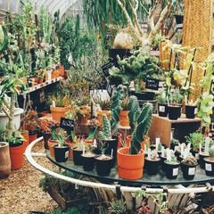 植物と暮らす/植物/サボテン/フォロー大歓迎/風景 SOLSOFARM  おしゃれな写真を沢…