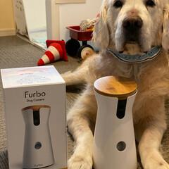 犬と猫のいる暮らし/老猫/老犬/犬/猫/goldenretriever/... * * Furboを買いました🎥 * 1…