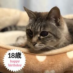 誕生日フォト/老猫/シニア猫/LIMIAペット同好会/フォロー大歓迎/ペット/... * * お誕生日おめでとう🎉 * 真っ黒…