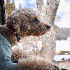 LIMIAペット同好会/ペット/犬/わんこ同好会/おでかけ/旅行/... 雪山からの帰り道。 窓を開けたら、春のに…