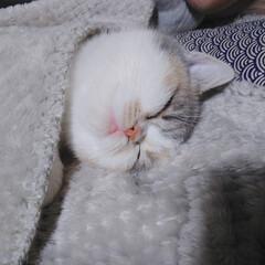 おやすみショット まんまるお顔でスヤスヤ。