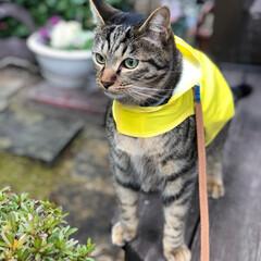 散歩/LIMIAペット同好会/フォロー大歓迎/ペット/ペット仲間募集/猫/... 雨の隙間に☂️ 一応カッパ着て行こう🐈🐾