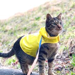 散歩/LIMIAペット同好会/フォロー大歓迎/ペット/ペット仲間募集/猫/... 雨上がり☂️ たまには雨の匂いも良いね🌿