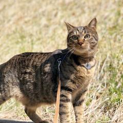 散歩/LIMIAペット同好会/フォロー大歓迎/ペット/ペット仲間募集/猫/... お気に入りの塀の上で🌿