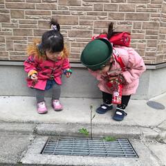 小さい春/頑張れ/5歳/1歳/姉妹/春の訪れ/... 何色のお花が咲くと思う?