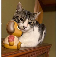 可愛い/貯金箱/子猫/住まい/暮らし 子猫の、いっしんฅ(^^ฅ)  愛犬の貯…