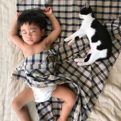 猫/ねこ/ネコ/保護猫/ハチワレ/お昼寝/... モジーと息子のお昼寝。 一年半前は2人と…