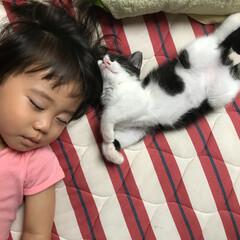 ネコ/おやすみショット/猫/ねこ/ハチワレ/保護猫 ひっついてお昼寝です。