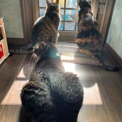 令和の一枚 令和の朝、窓を開けると雨が上がった 朝日…