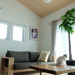 勾配天井/ragdoll/ラグドール/一枚板/モンキーポッド/LIMIAペット同好会/... お気に入りの家具♡ お気に入りのリビング…