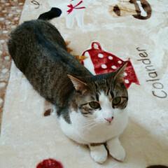 うちの子ベストショット/猫好きさんと繋がりたい/LIMIAペット同好会/フォロー大歓迎/ペット/ペット仲間募集/... お手手そろえて、はいポーズ😸💕