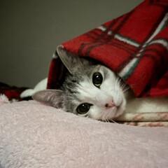 「ちゃーんと枕して寝てるの可愛すぎる😭🙏🏻…」(1枚目)