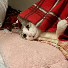 「ちゃーんと枕して寝てるの可愛すぎる😭🙏🏻…」(2枚目)