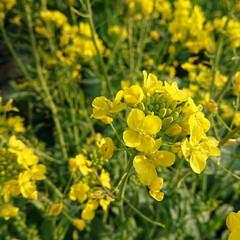小さい春 元気が出る黄色✨春も近いですね💛