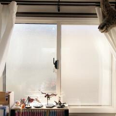 住まい/リフォーム/寒さ対策/窓/断熱/内窓/... DIYで取付できる内窓を子供部屋につけた…(1枚目)