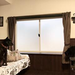 内窓/寒さ対策/住まい/インテリア/リフォーム/楽窓/... ほのぼのですね。朝寒くなってきましたけど…
