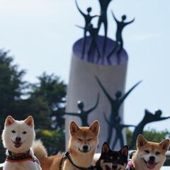 散歩/ペット/極小豆柴/豆柴/柴犬 岡本太郎の母の塔の前で お友達とパシャリ…