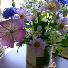 ガーデニング お庭の草花✨ アグロステンマ ミヤコワス…